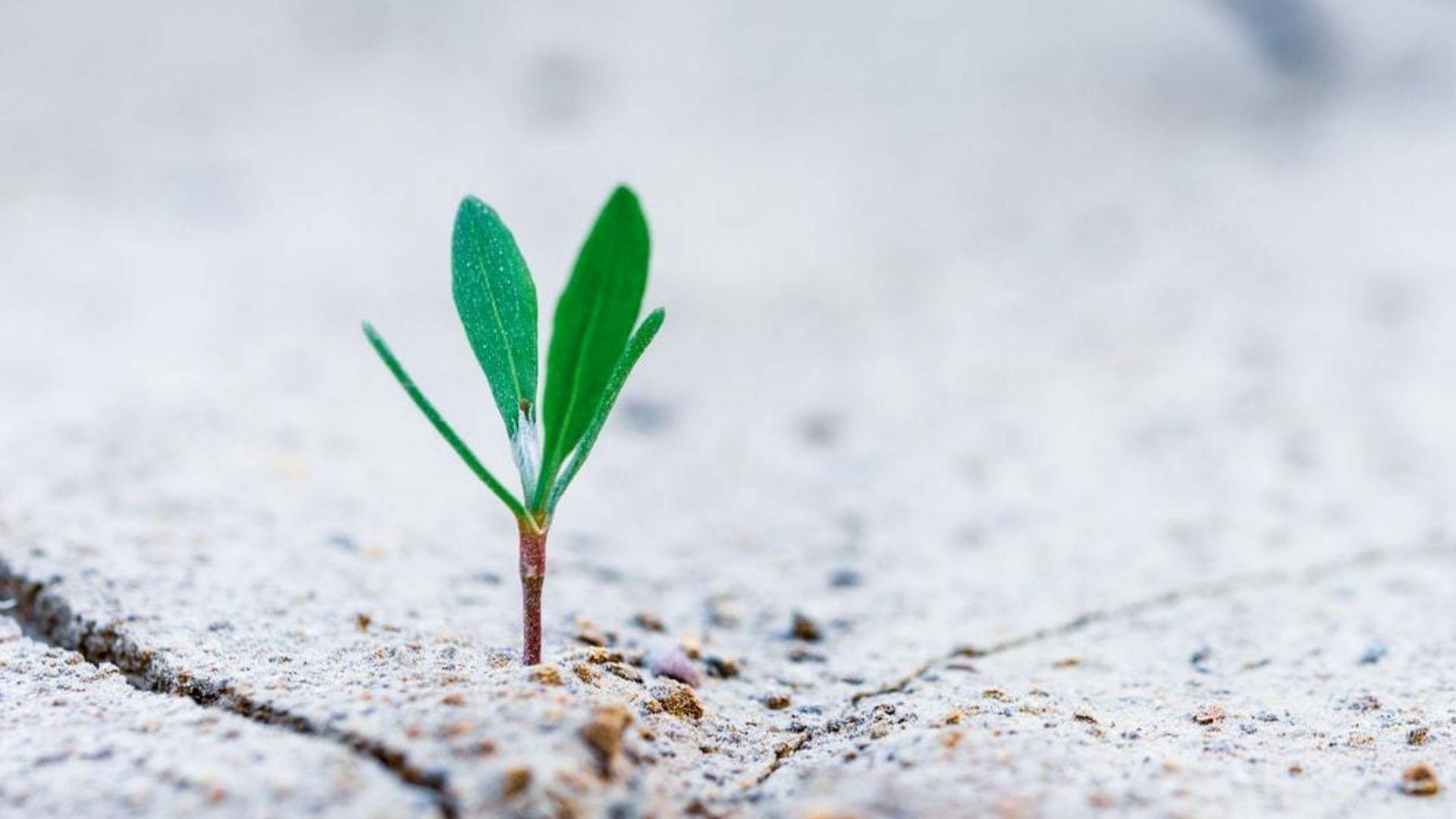 Coaching Mindset Self-Development